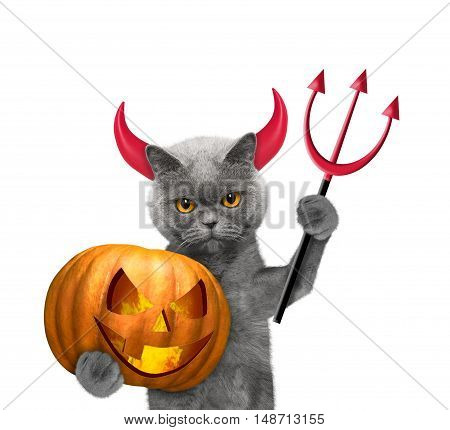 Cat with pumpkin in devils costume for Halloween -- isolated on white