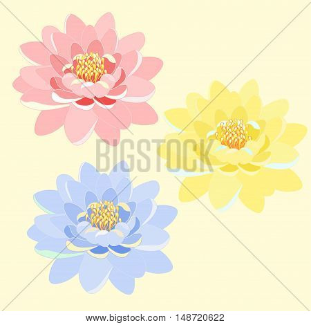 Set Of Lotus Flower Pink, Blue, Yellow, Close Up. Vector Illustration