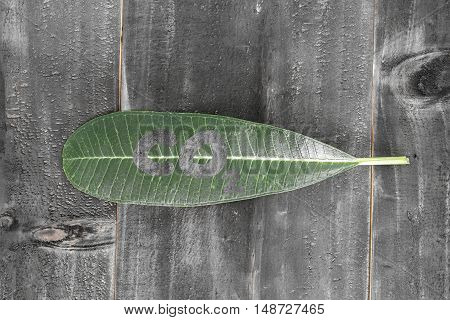 green leaf with co2 text on black wood background shade abstract style