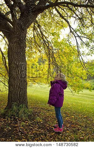 Toddler girl standing under autumn colored tree looking up
