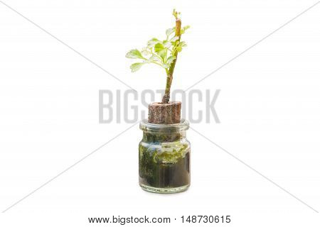 Small Tree in a pot isolated on white background