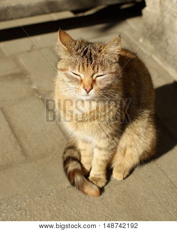 Cat keeps his head under the warm rays of the sun.