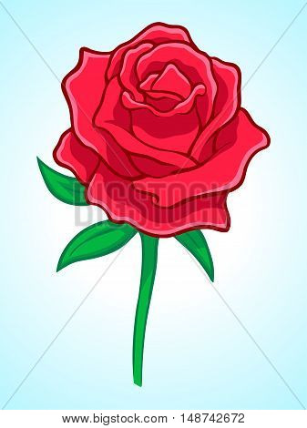 A Rose flower with leaves in detailed coloring