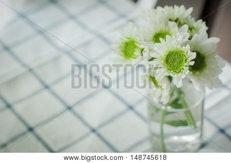 mum, decoration, soft, natural, green, floral, garden, design, bouquet, chrysanthemum, color, white, fall, sweet, blurry, beauty, flower, yellow, bright, beautiful, background, pastel, blossom, bloom, nature, vase