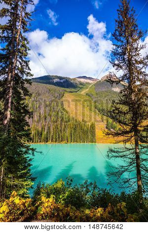 The emerald-green lake surrounded by a pine forest. Magic Emerald Lake in the Canadian Rockies