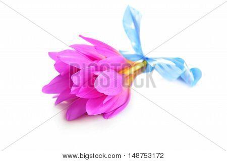 Bouquet Of Crocus