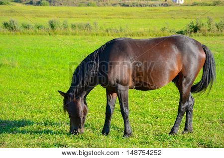 horse on green field eating fresh grass caucasus in mountains