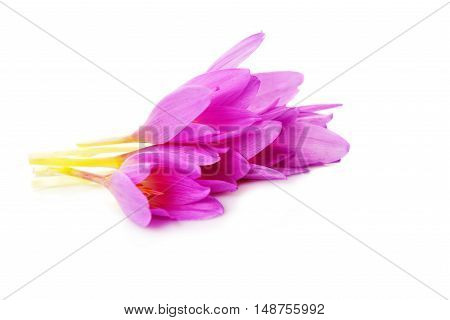 beautiful  spring flowers crocus isolated on white