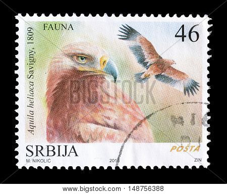 SERBIA - CIRCA 2016 : Cancelled postage stamp printed by Serbia, that shows Eastern Imperial Eagle.