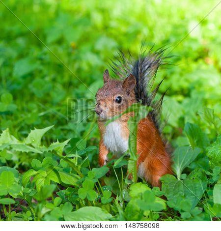 Squirrel sitting in grass