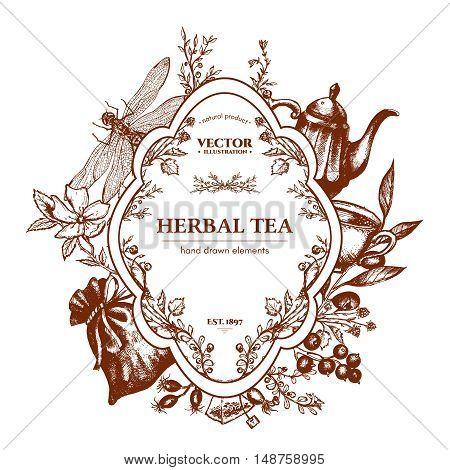 Herbal tea herbs and flowers botanical vintage herbs tea background hand drawn ink vector