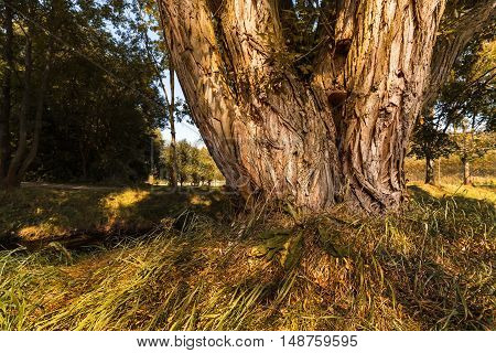Tree trunk with polypore and green grass. Moravian landscape Lhota Rapotina.