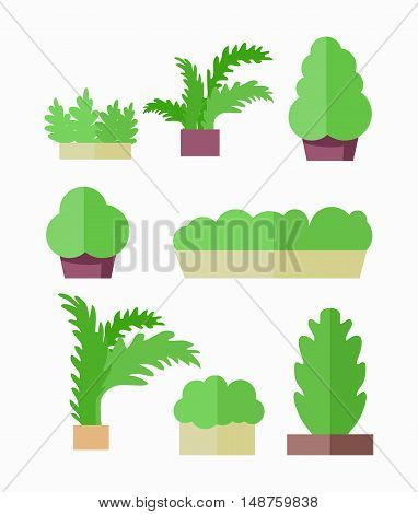 Decorative plants vector illustration in flat design. Food growing on vegetable bed or pot. Isolated on white background.