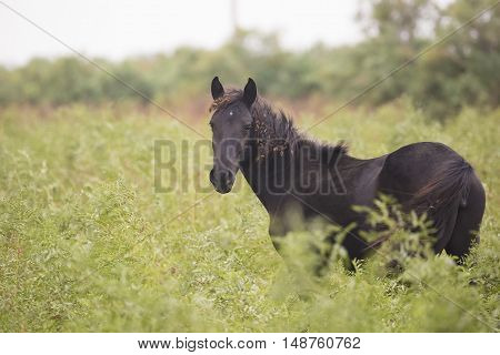 Black horse in the meadow. Nature concept