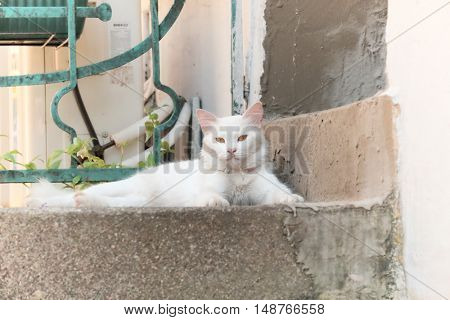 white cat looking at me
