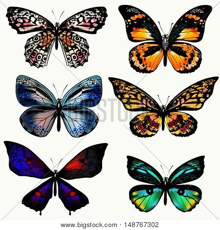A collection of vector realistic butterflies in vintage style. Colorful design ideal for T-shirt prints