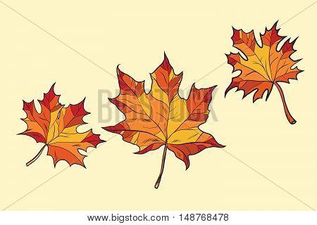 Maple leaves red, pop art retro vector illustration. Seasons nature, autumn
