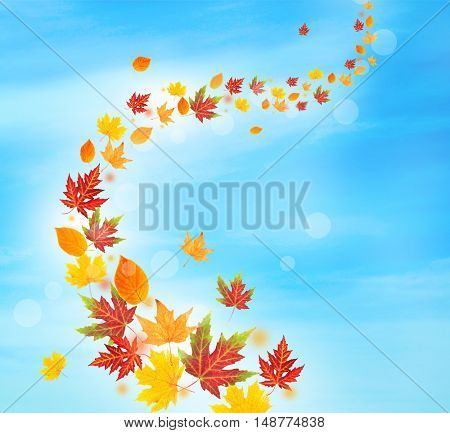 Autumn falling leaves on blue sky background