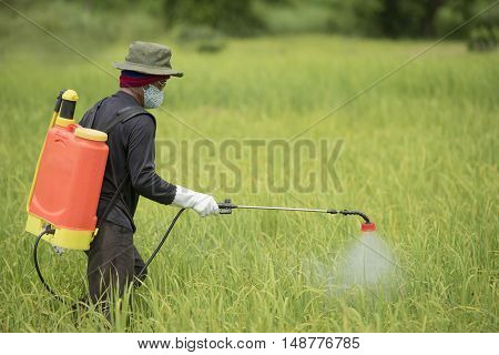 Farmer spraying pesticide during sunset time,morning time