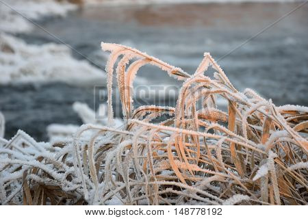 Dry Grass With Hoarfrost Crystals