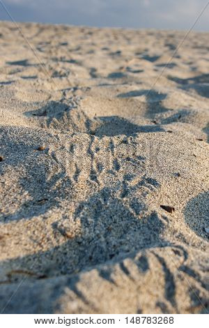 Bird footprints on the sand at National Natural Park Tayrona in Colombia