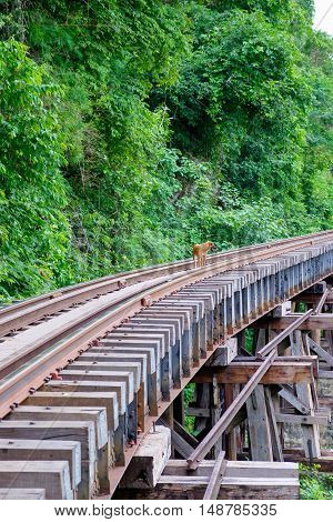 Dog on the Death Railway bridge at Krasae Cave in Kanchanaburi Thailand.