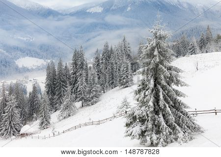 Winter forest with fog in the background.