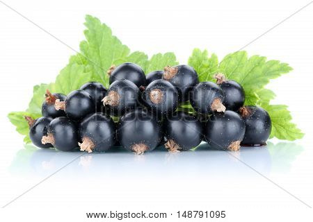 Black Currant Currants Berries Fresh Fruits Fruit Isolated On White