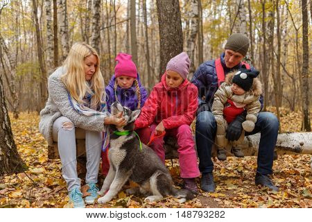 mother with dog breed Husky, two daughters, father and little boy sitting on fallen birch tree in woods