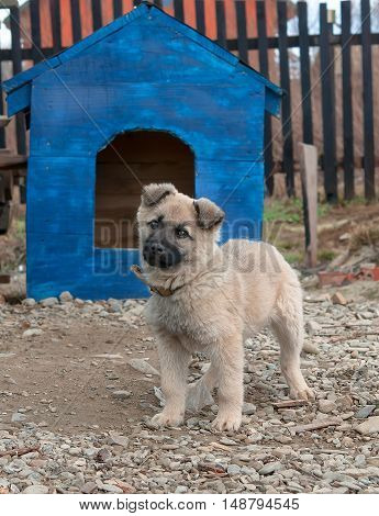funny dog in the dog house. A close up