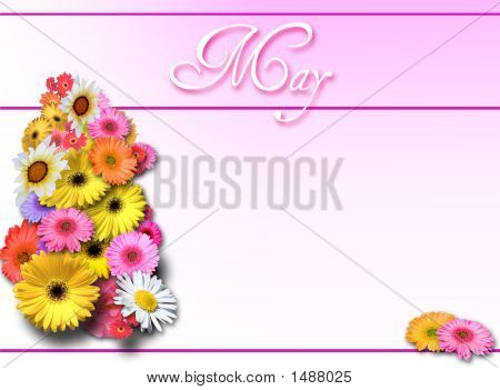 May Day Flowers With Pink Gradient
