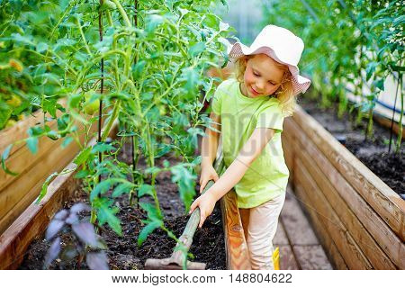 A lovely little girl gathering in ripe tomato harvest in a vegetable garden. Kids are playing. Little helpers.