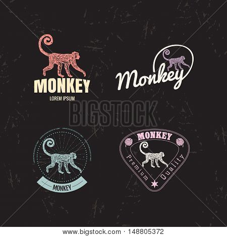 Vector logo set with Jungle Monkey. The Monkey as main element of logotypes