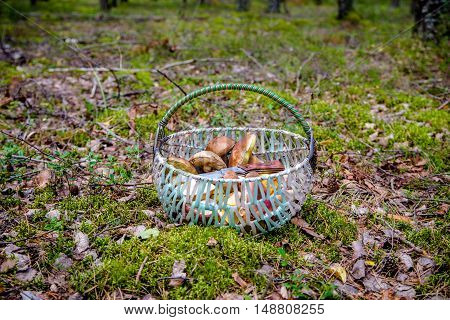 basket with mushrooms and a knife standing in a forest glade