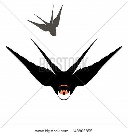swallow in flight vector illustration black silhouette