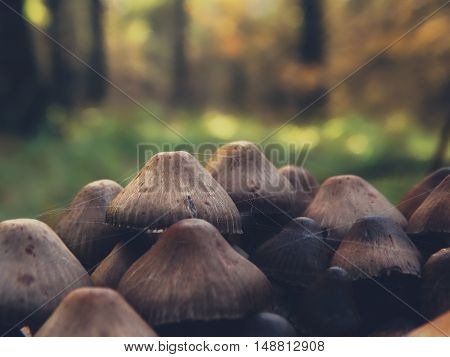 Autumn mushrooms in the forest nature autumnal toadstool medicine outdoor