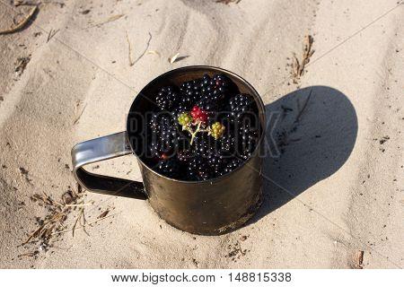 Lot blackberries in metal mug slay on sand. Tourism, camping, travel, gathering