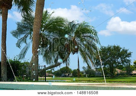 palm trees and fountain in pool in tropical