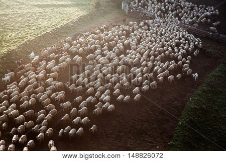 Sheep farm in the mountains