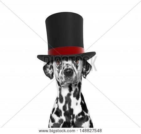 Dog in a high hat cylinder -- isolated on white