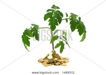 Exuberant Plant In Heap Of Coins