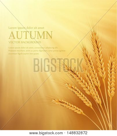 vector orange background with sun rays and ears of wheat