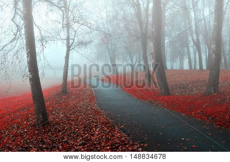Autumn park nature -misty autumn view of autumn park alley in dense fog.