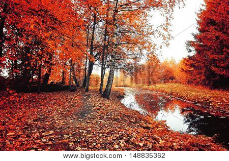 Autumn nature landscape- autumn trees near the forest stream. Autumn trees and red fallen autumn leaves carpet in cloudy weather - autumn colorful landscape in vintage colors. Forest autumn landscape