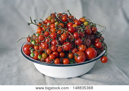 fresh ripe red cherry tomatoes on a white plate, home grown autumn harvest - isolated on white background - clipping path