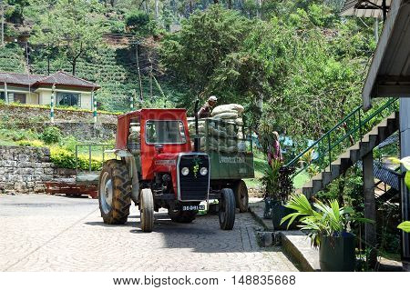 NUWARA ELIYA SRI LANKA - OCTOBER 18 : The workers unloading bags with tea leafs. October 18 2011 in Nuwara Eliya Sri Lanka. Directly and indirectly over one million Sri Lankans are employed in the tea industry