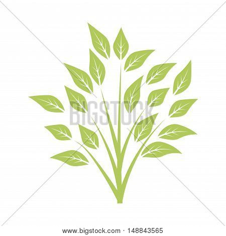 Green bush with leaves, young sprout. Floral element with branches and leaves isolated on white background. Vector illustration.