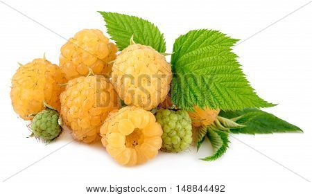 Heap of Yellow Raspberries on White Background