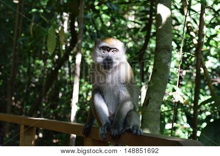A long tailed monkey sitting alone in the forest