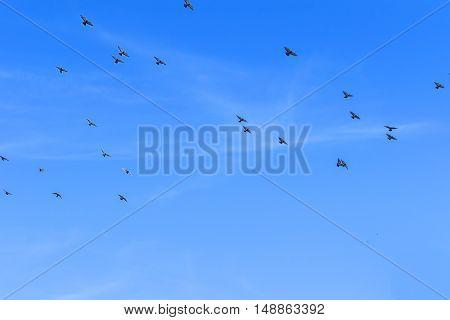 стая голубей в полете. птицы в небе. голуби.
